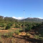 PLANTATION ORANGERS 2 DE NOV 2016 VU EN 08 2017