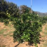 PLANTATION ORANGERS 2 MARS2015 VU EN 09 2017